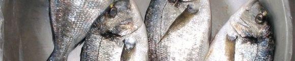 Pescado gr