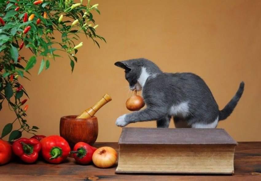 Peligro cebolla para gatos