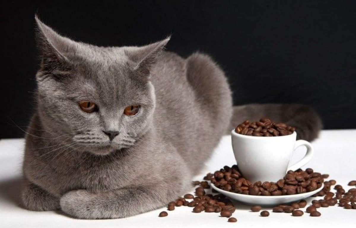 Alimentos peligrosos gatos