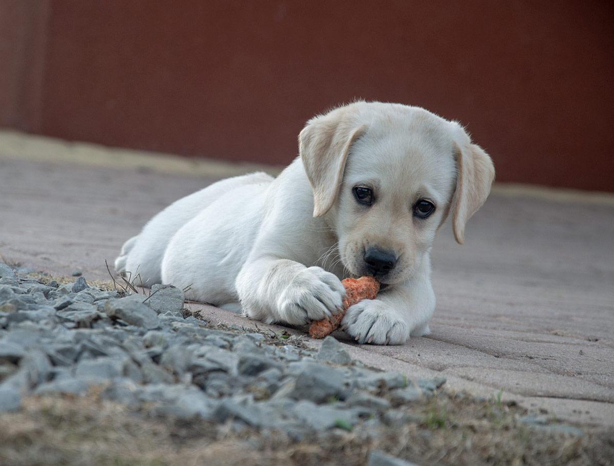 perro comida