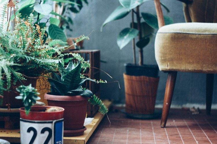 Plantas casas aire beneficios 2 art