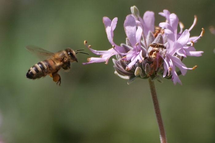 Img abeja flor
