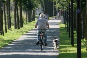 Img abuelo bici art