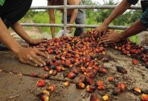Img aceite palma medio ambiente