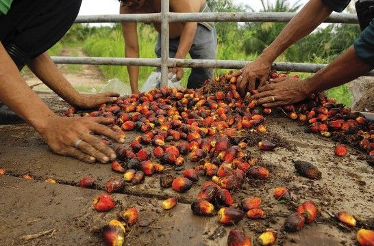Img aceite palma medio ambiente listg