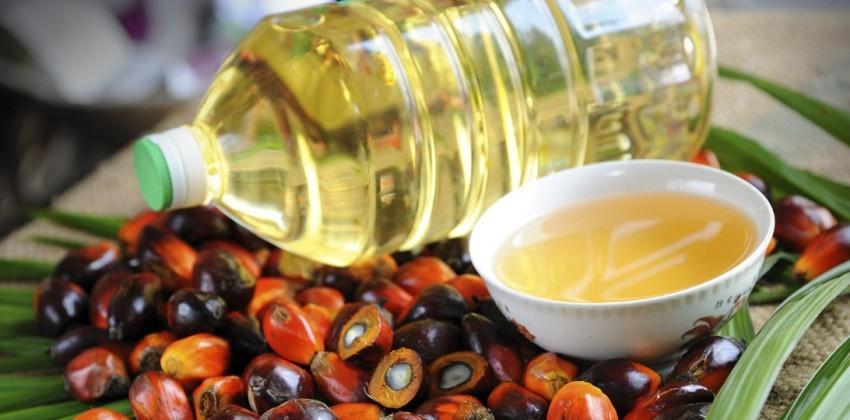 Img aceite palma salud port