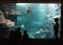 Img acuarium