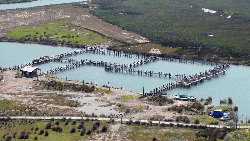 Img acuicultura