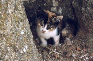 Img adoptar gatos calle como recoger cuidados casa animales mascotas art