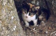 Img adoptar gatos calle como recoger cuidados casa animales mascotas listado