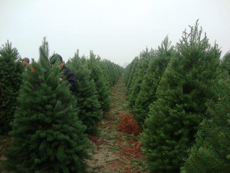 Img adornos navidad ecologicos 02