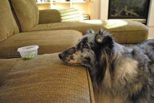 Img alimentar perros delgados desnutridos consejos animales mascotas comidas art