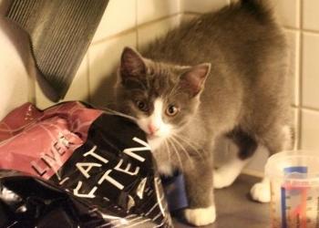 Img alimentos gatos consejos art