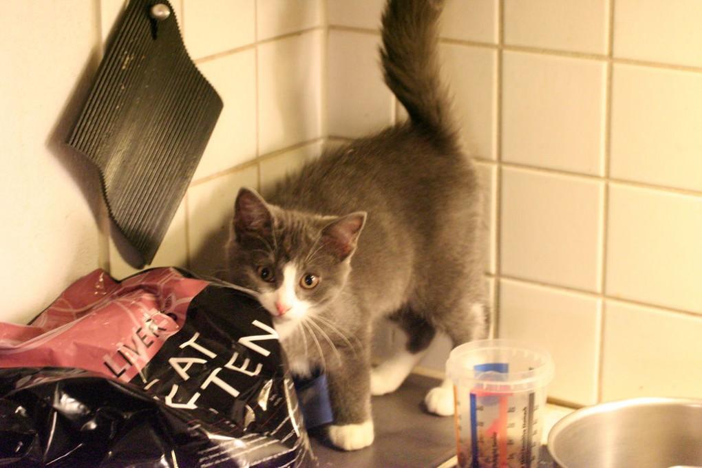 img_alimentos gatos consejos