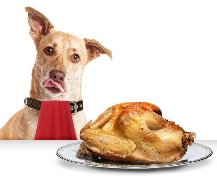 Img alimentos humanos perros1 art