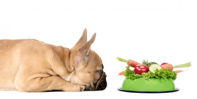 Img alimentos humanos perros2 art