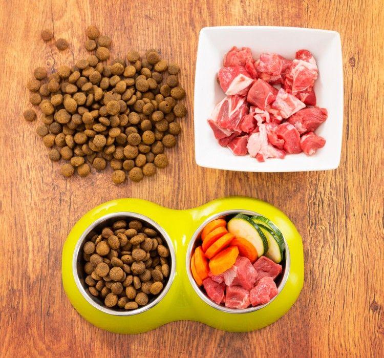 Img alimentos humanos perros3 art