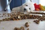 Img alimentos para cuidar piel perro comida listado