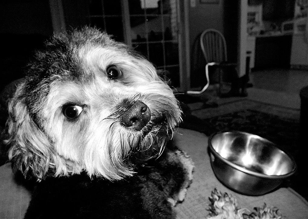 Img alimentos perros alergias