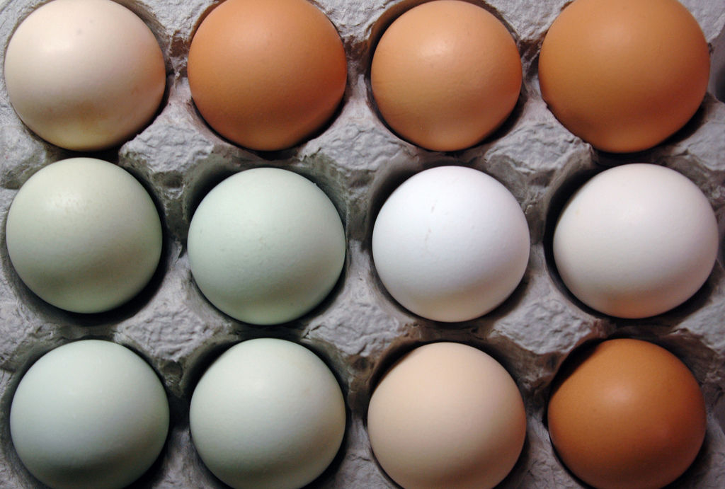 img_almacenar huevos hd_