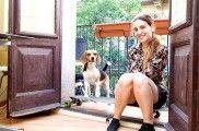 img_alojamiento perros gatos mascotas hospedaje dinero ganar extra hoteles listado