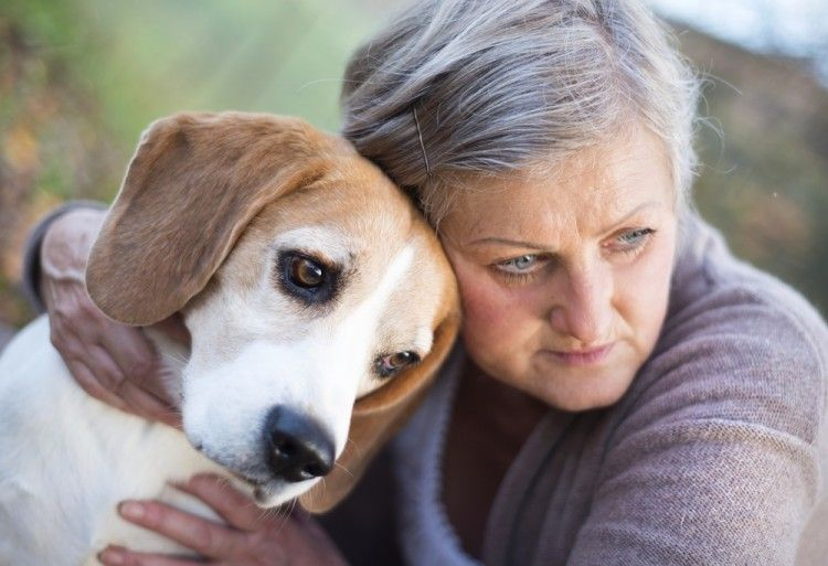 Img alzeimer perros sintomas art