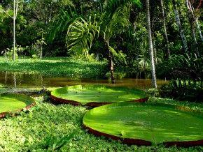 Img amazonas