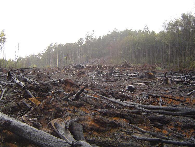 Img amazonas deforestacion