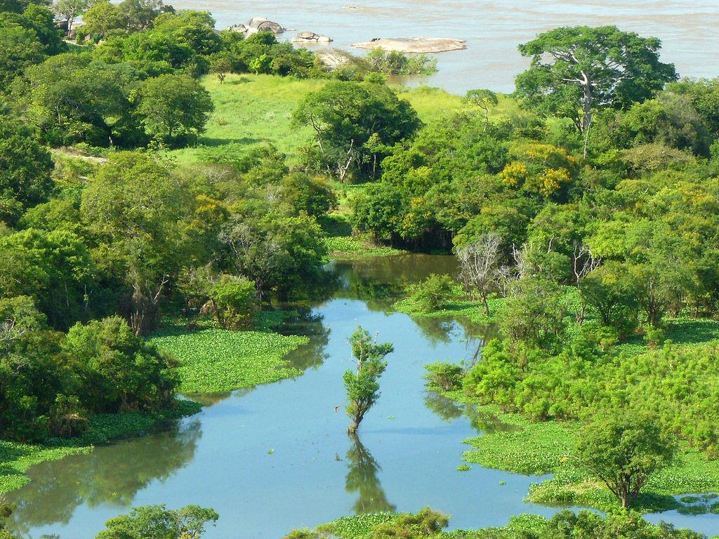 Img amazonas hd