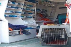 Img ambulancia mascotas perros gatos art