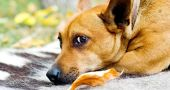 Img animales abandonados perro
