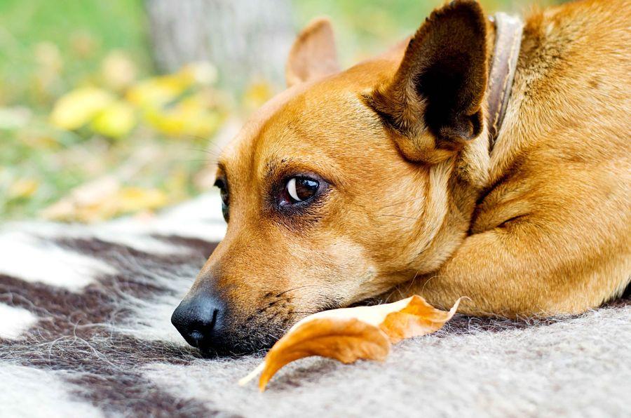 img_animales abandonados perro 2