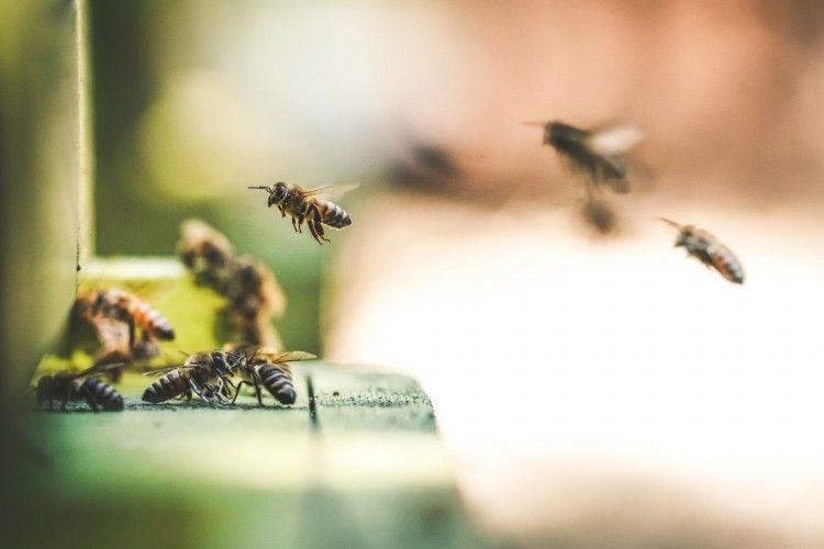Img animales abejas art