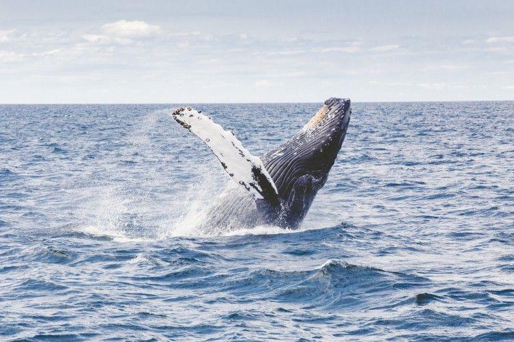 Img animales ballenas art