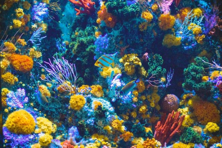 Img animales coral art