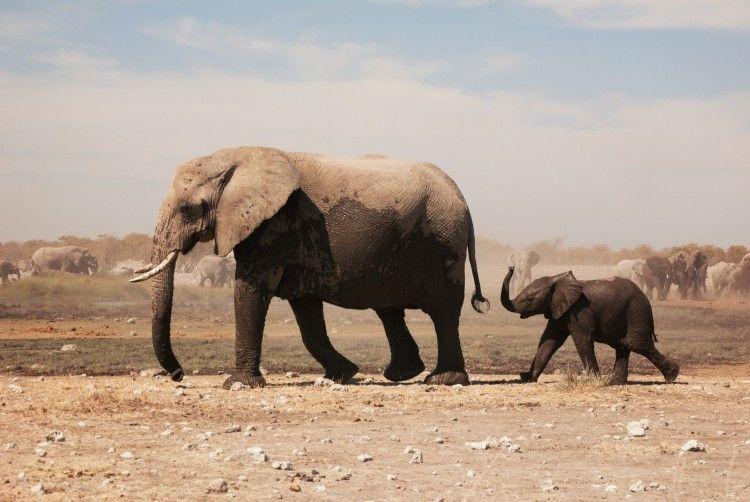 Img animales elefante art