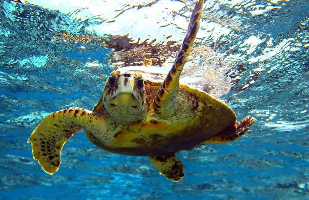 Img animales marinos plastico comen