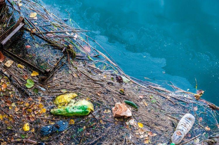 Img animales marinos plastico comen art
