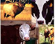 Img animals 1