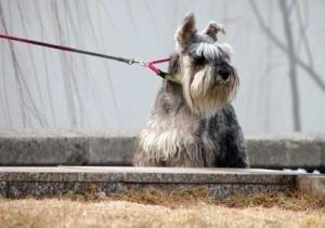 Img anticorrea perro correa mascotas accesorios art