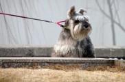 Img anticorrea perro correa mascotas accesorios listado