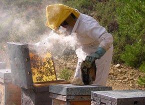 Img apicultura abejas
