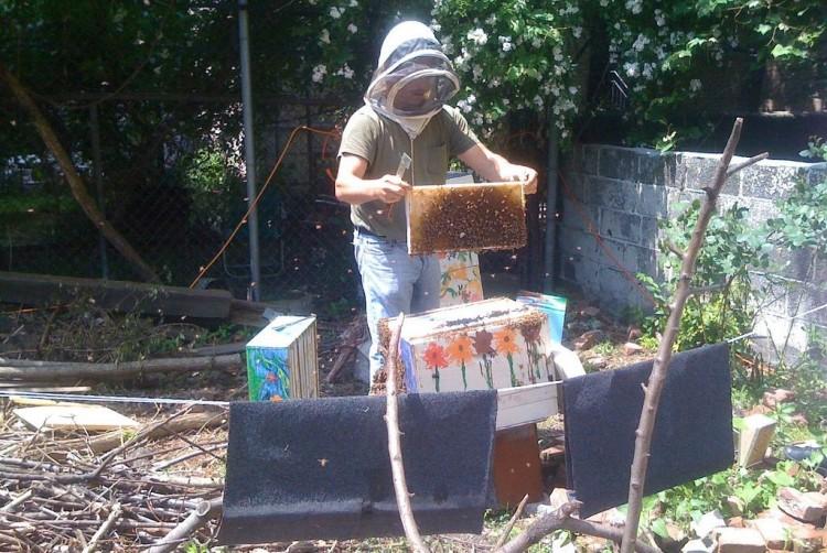 Img apicultura urbana