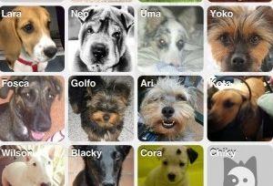 Img aplicaciones moviles perros red social animales telefono art