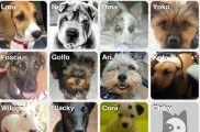 Img aplicaciones moviles perros red social animales telefono listado
