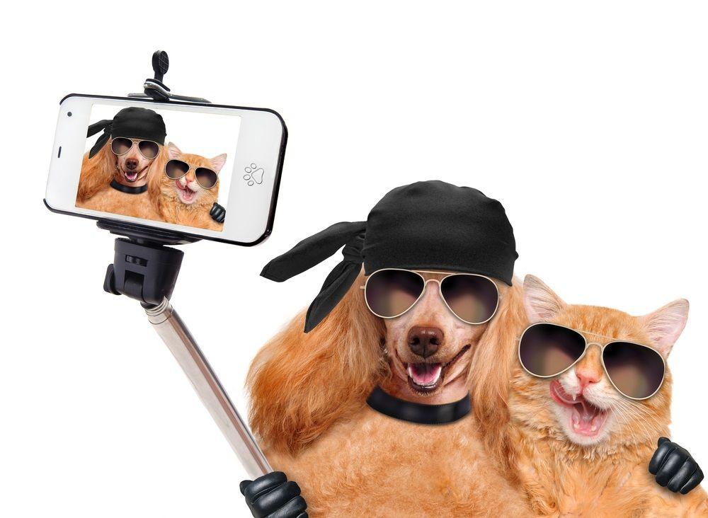 img_aplicaciones perros gatos