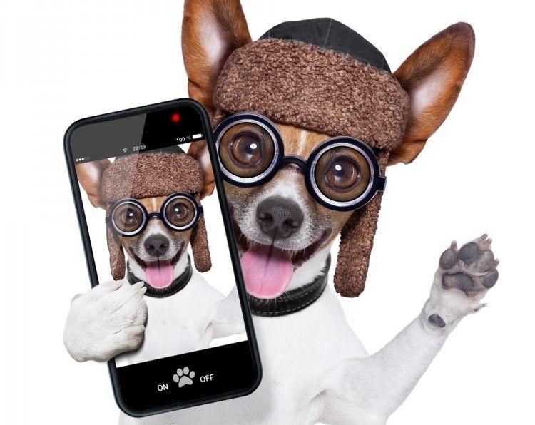 Img aplicaciones perros viajar art
