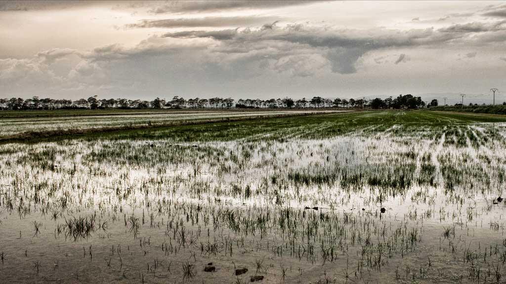 Img arrozal