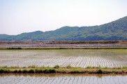 Img arrozal listado