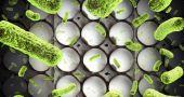 Img aumentan casos salmonella hd